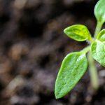 Nachhaltige Fonds – Was steckt hinter dem GreenFolio von VisualVest?
